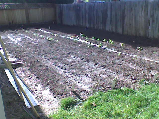 My Garden Spot
